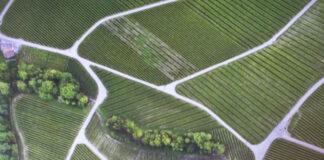 Lavaux terrazzamenti verdi unesco
