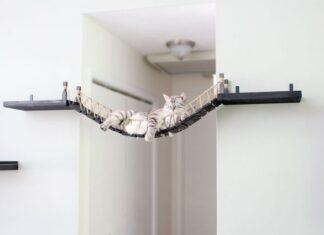 casa a prova di gatto