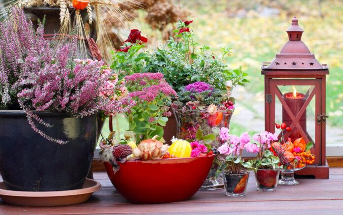 fiori-autunnali