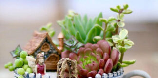 giardini in miniatura